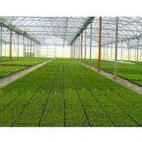 温室建设服务 制造商