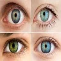 Human Eye Chart Manufacturers
