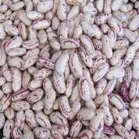 有斑点的芸豆 制造商