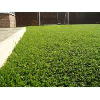 Artificial Grasses Manufacturers