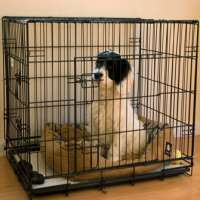 Puppy Crate Manufacturers