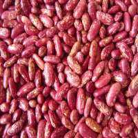 Red Speckled Kidney Bean Manufacturers