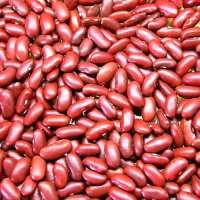 Red Kidney Bean Manufacturers