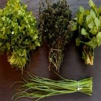 Aromatic Herbs Manufacturers
