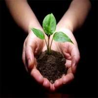 植物树苗 制造商