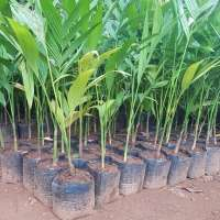 Arecanut Plant Manufacturers