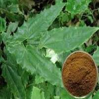Epimedium Extract Manufacturers