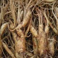 Ginseng Roots Manufacturers