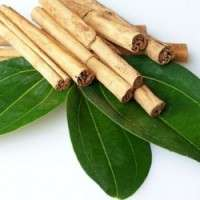 Cinnamomum Zeylanicum Manufacturers