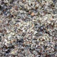 Cotton Seed Waste Manufacturers