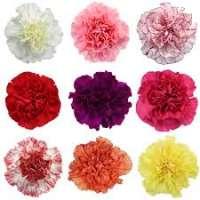 Carnation Flower Manufacturers