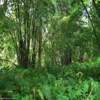 Forestry Plants Manufacturers