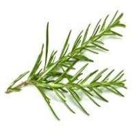 Rosemary Leave Manufacturers