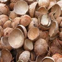 Coconut Shell Manufacturers
