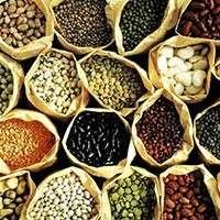 Vegetable Seeds Manufacturers