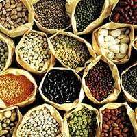 蔬菜种子 制造商
