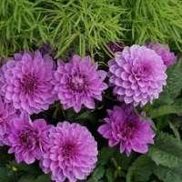 Ornamental Flowers Manufacturers