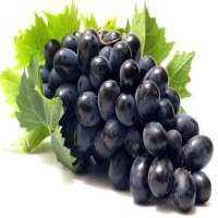 黑葡萄 制造商