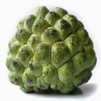 Custard Apple Manufacturers