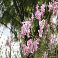 Singapore Orchid Manufacturers