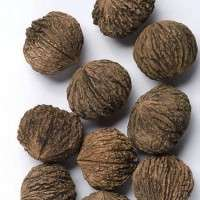 Black Walnut Manufacturers