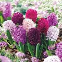 Spring Flower Manufacturers