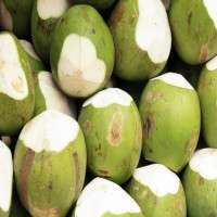 Tender Coconut Manufacturers