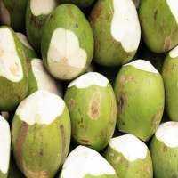 嫩椰子 制造商