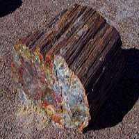 石化木 制造商