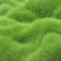 Lawn Grass Manufacturers