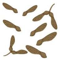 Tree Seeds Manufacturers