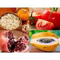 Fruit Seeds Importers
