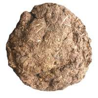 Cow Dung Manufacturers