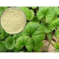 Centella Asiatica Extract Manufacturers