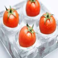 Frozen Tomatoes Manufacturers