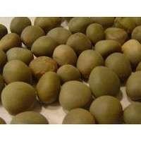 Caesalpinia Crista Seed Manufacturers