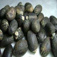 麻风树种子 制造商