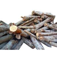 Eucalyptus Log Manufacturers