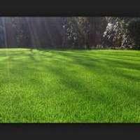Natural Grass Manufacturers
