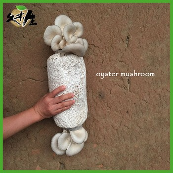 Huadian City Jiumusheng Fungus Industry Co , Ltd  - Liaoning, China