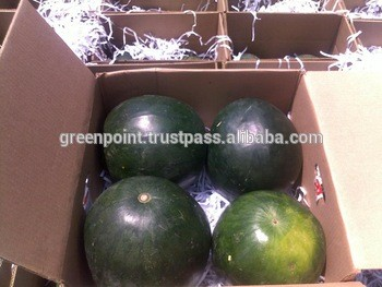 Green Point For Import And Export - Egypt