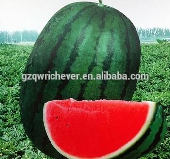 Guangzhou Ruichian Agriculture Limited Company - Guangdong