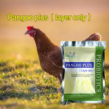 Poultry Chicken Probiotics Feed Ingredient From Cangzhou