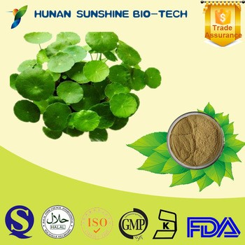 gotu kola extract 95 Asiatic acidayurvedic herbs Asiatic pennywort